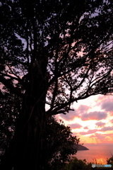 Banyan sunset