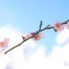 bright spring!