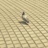 競馬場の鳩