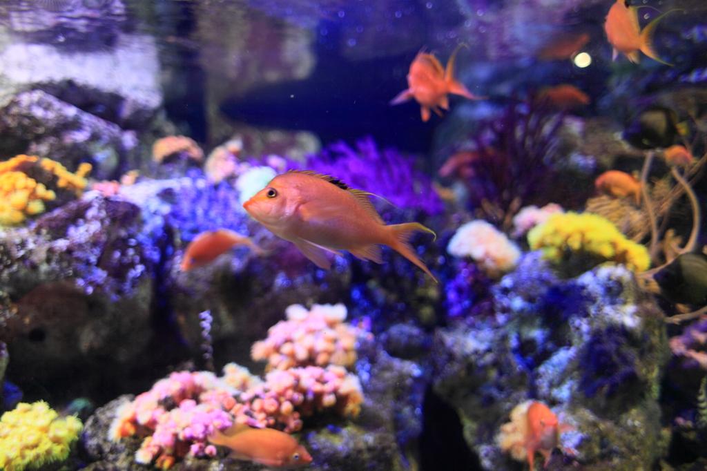 サンゴ礁の海の水槽。