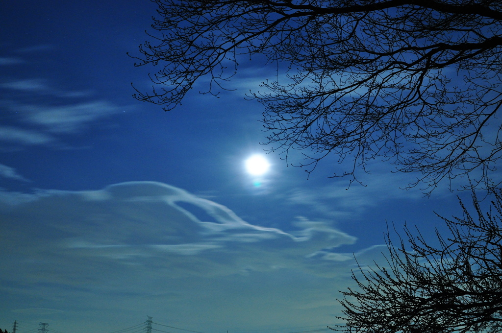 月夜に羽ばたく鳥
