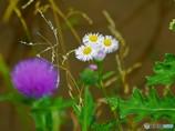 いつもの里山・普通の田んぼ・普通の野草