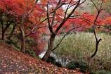 池の端にて