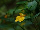 里山の秋…笑う花(^-^)