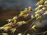春の色づき