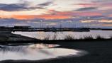 港にて・・秋草と海鳥たちと茜雲と
