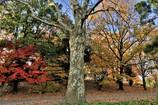 大きな木・小さな木・中くらいな木・・・