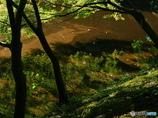 秋色を待つ里山の鏡池です。
