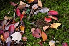 色々落ち葉