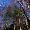枯れ切らない森・・緑の力