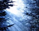 「彷徨いの森で」