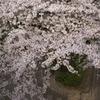 sakura20110410_20