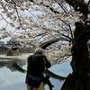 桜とカメラマンと錦帯橋
