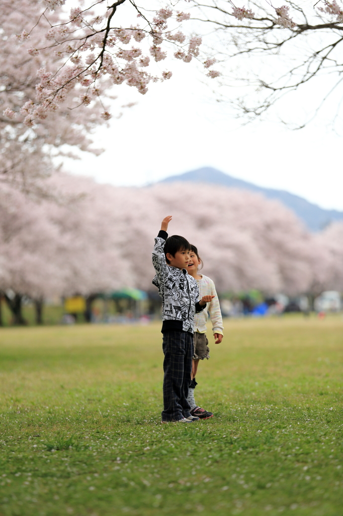お兄ちゃんの頭に桜