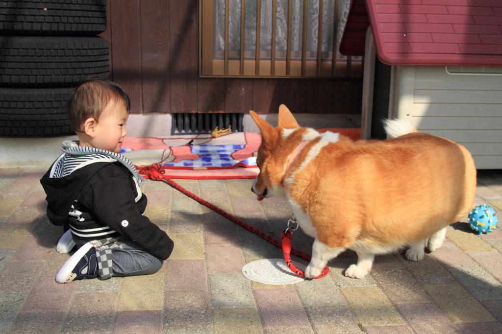 孫と愛犬(会話中)