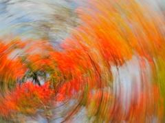 去りゆく秋の波紋