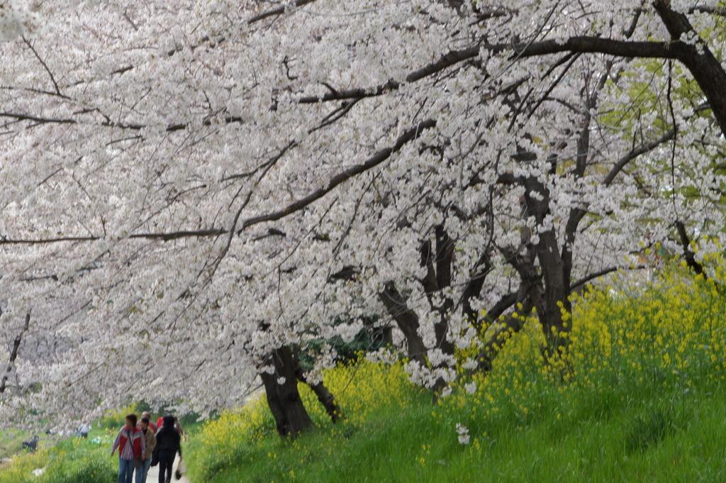 春のの散歩道