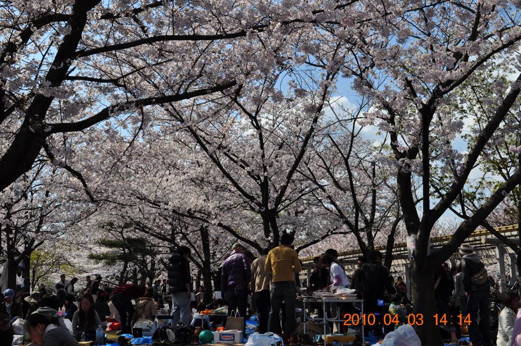 2010年 桜花見その1