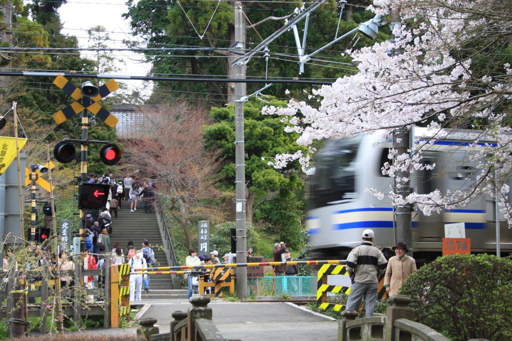 円覚寺と横須賀線