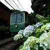 御霊神社 2011,06,11