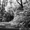 瑞泉寺 石階段