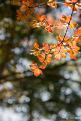 Autumn colors 2018'