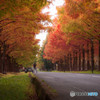 green road Ⅳ