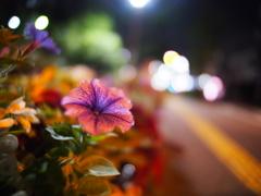 夏の夜の花壇