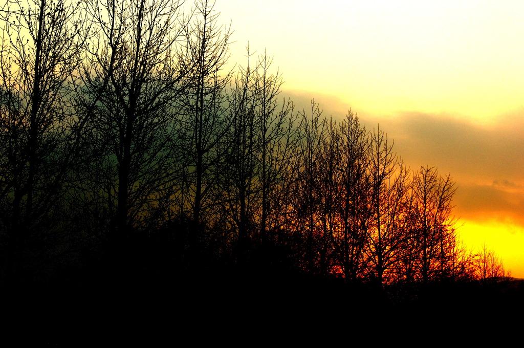 冬枯れ木立