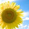 夏に咲く笑顔