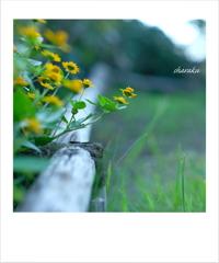 秋の日に咲く