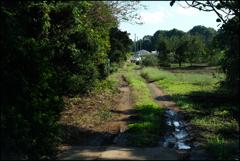 農村の風景⑦