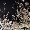 DSC_0894夜桜