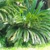小さなジャングル
