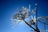 凍てつく冬