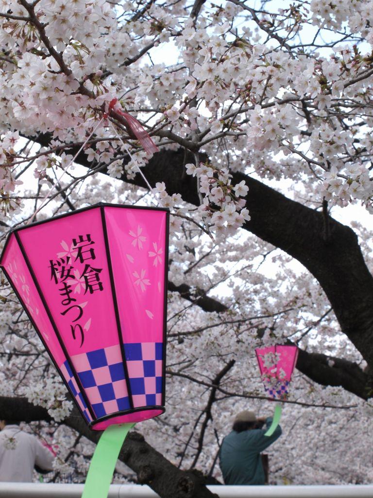五条川の桜 #2