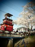 岩倉・桜まつり #4