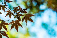 清澄庭園の秋 その2