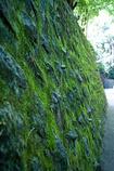 等々力の緑の壁