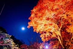 月夜の紅葉