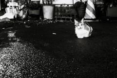 思案橋の路地にて_猫