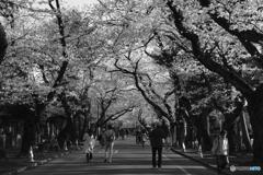2018_桜5