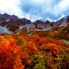 涸沢の短い秋2