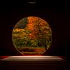 明月院の秋