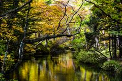 秋色の清流