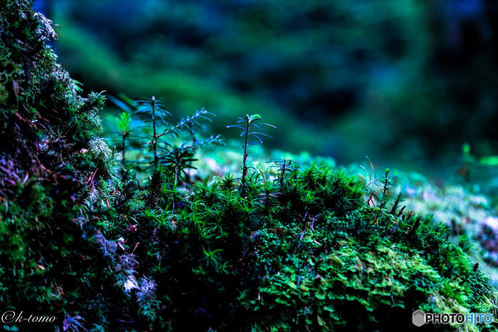 白駒池の苔2