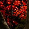 長谷寺の紅葉①