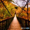 秋の吊り橋