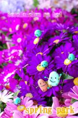 Happy spring ☆★