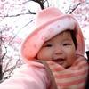 桜色に桃色の娘